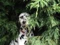 doggy-hiding