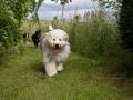 spilmah-dog-boarding-exercise